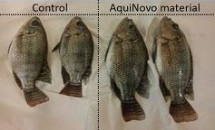 aquinovo-fish comparison